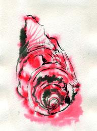 shell-in-ink010125.jpg