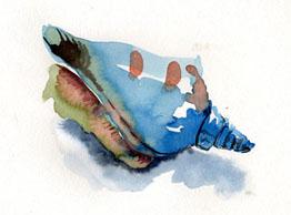 shells-in-wc030127.jpg